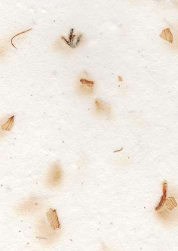 seeds and lily petal handmade paper