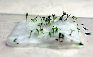 Sprouting seed paper